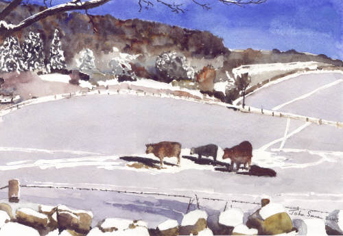 Winter Cows above Slad - Gloucestershire